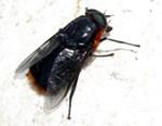 Como evitar los insectos en el campamento