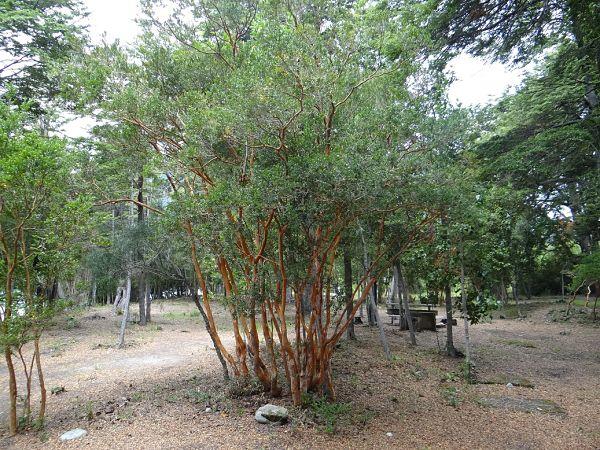 Camping en Futaleufu - Region de Los Lagos