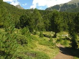 bosco-pino-2