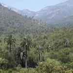 Camping Parque Nacional La Campana
