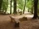 Camping Termas San Sebastian – Pucon