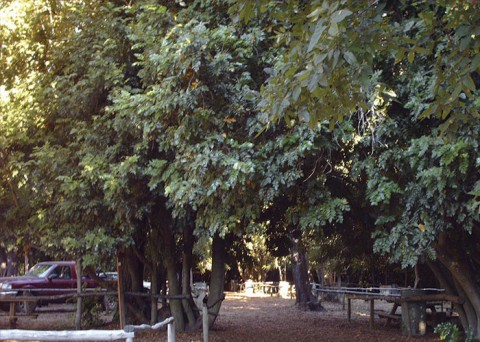 Camping Los Nogales