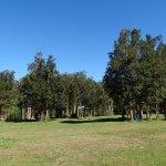 Camping Bosque Nativo