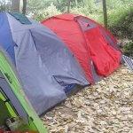 Camping Las Araucarias