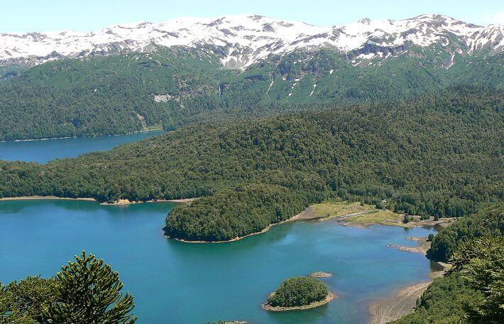 Parque nacional conguill o campingchile for Poda de arboles zona sur