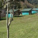 Camping Los Avellanos