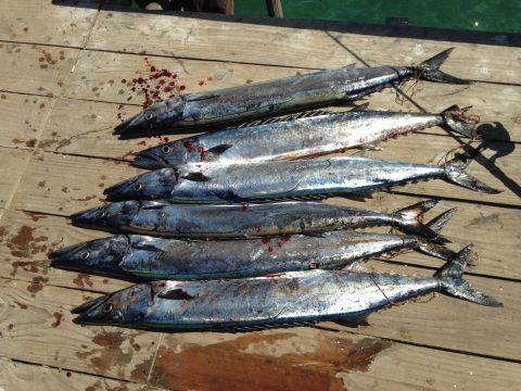 Pesca de sierras
